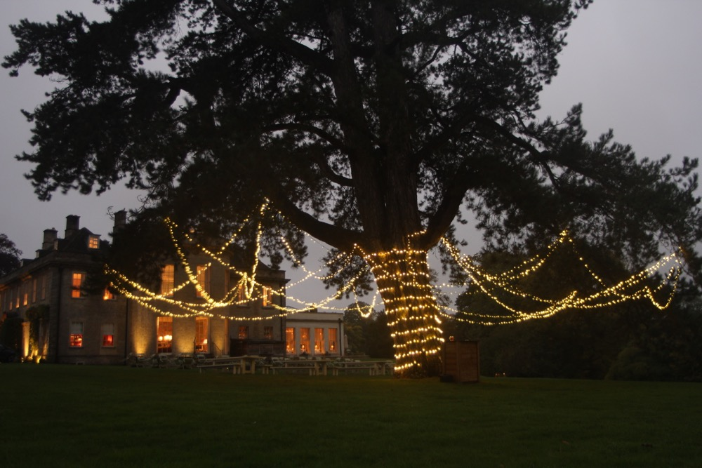 a Large pinte tree with a fairy-light canopy.
